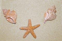 Раковины в песке стоковые фотографии rf