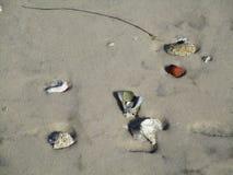Раковины в песке Стоковое Изображение RF