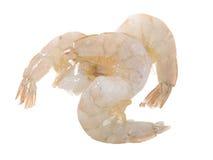 раковины головных креветок сырцовые Стоковая Фотография