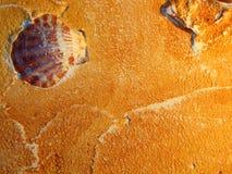 Раковины заполнителя и моря имитационного песка декоративные Стоковая Фотография