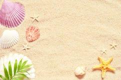 Раковины и ладонь моря на предпосылке песка пристаньте прибой к берегу лета камней песка Кипра свободного полета среднеземноморск Стоковые Изображения