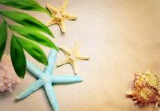 Раковины и ладонь моря на предпосылке песка пристаньте прибой к берегу лета камней песка Кипра свободного полета среднеземноморск Стоковые Изображения RF