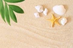 Раковины и ладонь моря на предпосылке песка пристаньте прибой к берегу лета камней песка Кипра свободного полета среднеземноморск Стоковое Фото