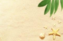 Раковины и ладонь моря на предпосылке песка пристаньте прибой к берегу лета камней песка Кипра свободного полета среднеземноморск Стоковые Фотографии RF