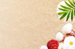 Раковины и ладонь моря на предпосылке песка пристаньте прибой к берегу лета камней песка Кипра свободного полета среднеземноморск Стоковое фото RF