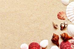 Раковины и ладонь моря на предпосылке песка пристаньте прибой к берегу лета камней песка Кипра свободного полета среднеземноморск Стоковое Изображение