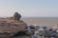 Раковины и деревянная часть Стоковые Фото