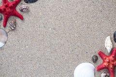 Раковины и звезда моря удят на песочной предпосылке Стоковые Изображения RF