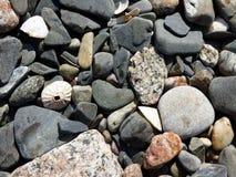 Раковины и камешки моря на берегах острова Iona, Scotla Стоковое Изображение RF
