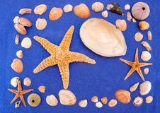 Раковины и морские звёзды моря стоковое изображение rf