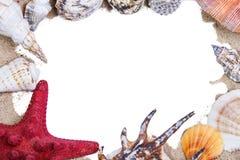 Раковины и морские звёзды моря Стоковое Фото