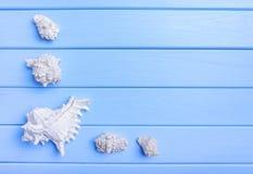 Раковины и морские звёзды на голубых досках Стоковая Фотография RF