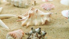 Раковины и песок сток-видео
