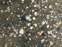 Раковины и предпосылка песка Стоковые Изображения