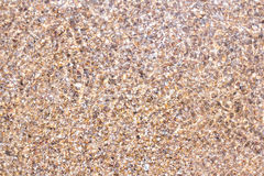 Раковины и части камня под водой Стоковое Изображение