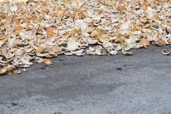 Раковины кокоса на сером асфальте Копра кокосов сухая Тропический плодоовощ варя ингридиент Стоковое Изображение RF