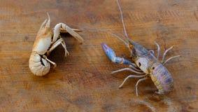 Раковины креветки Стоковые Фотографии RF