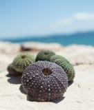 Раковины мальчишкаа моря на утесе с морем в предпосылке Стоковые Фото