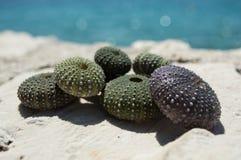 Раковины мальчишкаа моря на утесе с морем в предпосылке Стоковое Изображение