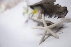 Раковины морских звёзд на белом песке Стоковое фото RF