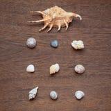 Раковины моря аранжированные на коричневой деревянной предпосылке Концепция памятей перемещения Взгляд сверху, изображение квадра стоковое изображение