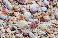 Раковины моря вдоль предпосылки пляжа Стоковые Изображения