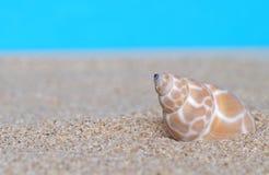 Раковины моря в песке стоковые изображения