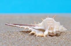 Раковины моря в песке стоковая фотография rf