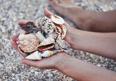 Раковины моря в руках на предпосылке песка и моллюска Стоковое Изображение RF