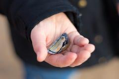 Раковины моря в руке Childs Стоковое фото RF