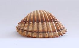 Раковины моря лета от пляжа воды праздника Стоковое фото RF