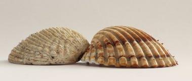Раковины моря лета от пляжа воды праздника Стоковые Изображения