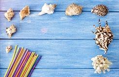 Раковины моря и выпивая соломы на seashells голубых деревянных предпосылки стоковые изображения rf