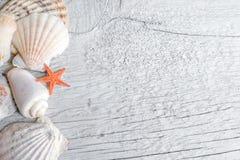 Раковины моря и оранжевая морская звезда Стоковое фото RF