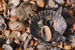 Раковины моря и часть коралла Стоковые Изображения