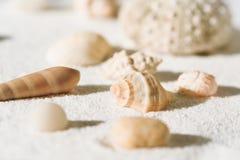 Раковины моря на белой предпосылке песка Стоковая Фотография RF
