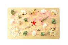 Раковины моря на деревянной доске Стоковая Фотография RF