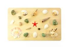 Раковины моря на деревянной доске Стоковое Изображение