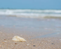 Раковины моря на пляже, запачканной предпосылке Стоковое Изображение RF
