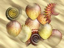 Раковины моря на пляже Стоковая Фотография RF