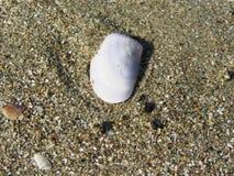раковины моря песка волейбол лета пляжа шарика предпосылки красивейший пустой Взгляд сверху Стоковое Изображение RF