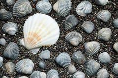 раковины моря песка волейбол лета пляжа шарика предпосылки красивейший пустой Взгляд сверху Стоковое Изображение