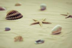 раковины моря песка пляжа Стоковое фото RF
