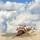 раковины моря песка пляжа Стоковая Фотография RF