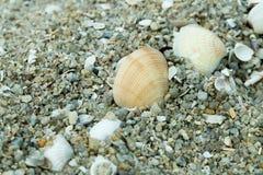 раковины моря песка стоковые фото