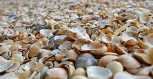 Раковины моря пляжа Конец-вверх, предпосылка Стоковые Изображения