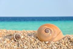 раковины моря пляжа Стоковое Фото