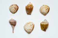 Раковины моря побережья мексиканского залива Флориды стоковые изображения rf