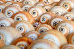 раковины моря предпосылки стоковое изображение