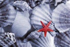 раковины моря предпосылки Стоковое Фото